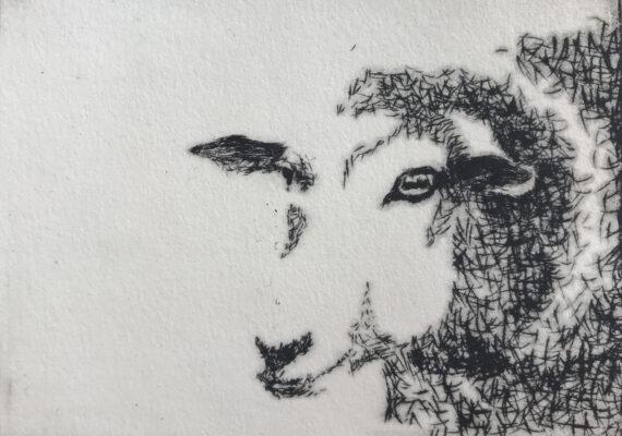 De schapen van Fer (etsen)