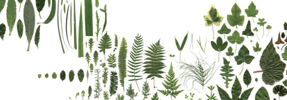 BOOK of PLANTS van Anne Geene